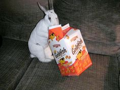 FAQ: Treat Foods - What to feed rabbits and what NOT to feed rabbits...From House Rabbit Society