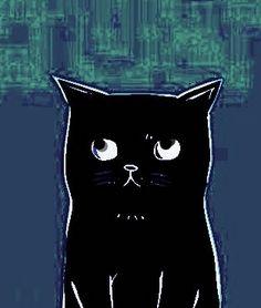 Black blue cat MoMo