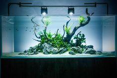 New Aquascaper 1500 layout at Evolution Aqua HQ. Day One. #aquascape #plantedtank