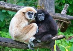 mammals that mate for life - Google Search