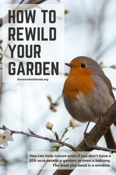Eco Garden, Insect Hotel, Green Life, Growing Flowers, Back To Nature, Cool Plants, Spring Garden, Native Plants, Ponds