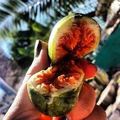 🌴FIGA 🌴🌱🍑pod palmą 💛 #fig #palms #sun #freshfruit #nutritionandyou #nutrition #Albania #diet #healthyplan #fruit #color #bluesky #owoce #dieta #gogreen #juicy #palmy #odżywianie