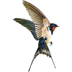 17 New Ideas For Swallow Bird Drawing Wings Bird Drawings, Animal Drawings, Drawing Animals, Swallow Bird Tattoos, Tattoo Bird, Swallow Tattoo Design, Barn Swallow Tattoo, Tattoo Forearm, Golondrinas Tattoo