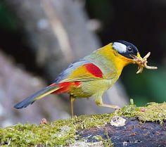 Birds of India | Bird World - Google+