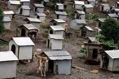 Animal Hostel   Abandoned Pet Village in Brazil