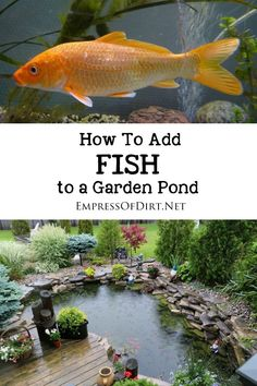 Simple instructions for introducing fish including goldfish and koi to a backyard garden pond plus tips for creating and maintaining a healthy habitat. # Gardening pond How to Add Fish to a Backyard Garden Pond Backyard Garden Landscape, Pond Landscaping, Natural Landscaping, Tropical Landscaping, Landscape Design, Garden Design, Koi Pond Design, Landscape Plans, Fish Garden