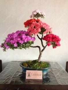 20pcs/bag 22 kinds Azalea Flower Seeds Rhododendron plant,Rare Bonsai DIY Garden Plants, Like Sakura Japanese Cherry Blooms