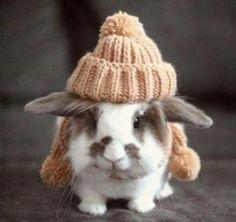 cozy bunny ready for winter