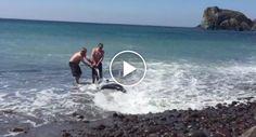 Turistas Resgatam Tubarão De 3 Metros Pesando Que Era Um Golfinho http://www.desconcertante.com/turistas-resgatam-tubarao-de-3-metros-pesando-que-era-um-golfinho/