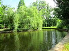 #GradinaBotanica #GradinaBotanicaBucuresti #CartierulCotroceni #Cotroceni  #ghid #urban #circuiteturistice www.cotroceni.ro River, Outdoor, Plant, Outdoors, Outdoor Games, The Great Outdoors, Rivers