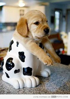 Filhote de cachorro descansando em um pote de biscoitos - filhote de cachorro bonito que senta em um pote de biscoitos.