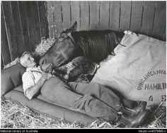 "Racehorse trainer Tommy Woodcock with his champion racehorse Reckless on the night before the 1977 Melbourne Cup. ""Horse and trainer died within months of each other in 1985. Tommy Woodcock holds a special place in Australian racing. He was strapper to the mighty Phar Lap in 1930 when the great horse won the Melbourne Cup, and Phar Lap died in his arms while overseas in 1932."" v@e."