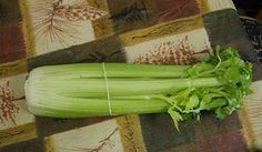 Regrowing Celery