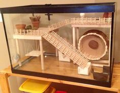Hamster cage diy aquarium conversion on pinterest for Fish tank for hamster