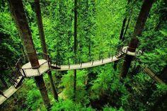 Tree top suspension bridges in Vancouver, BC Canada