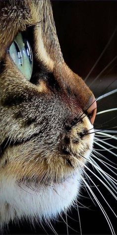 What a beautiful cat!