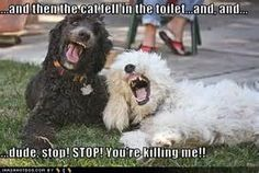 Funny Dogs Pictures Ever - Bing images