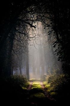 #Enchanted #Forest                                                                                                                                                      More