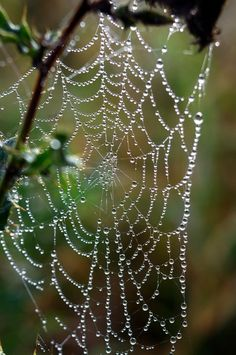 the enchanted glade: Photo Spider Art, Spider Webs, Enchanted Wood, The Good Witch, What Is Tumblr, Moonlight, Rain, Photography, Beautiful