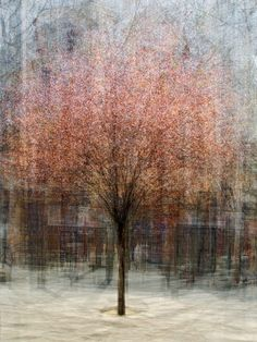 The photographic equivalent of Monet?? What?! --> Photomontages of Trees Appear Like Impressionist Paintings