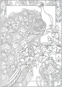 peacock coloring page 2931