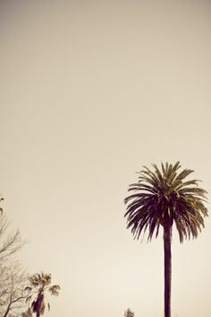 The magic palm tree in the Sonoma Plaza.  Photo by Megan Clouse Photography
