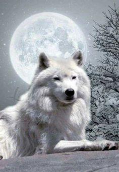 Liggende wolf
