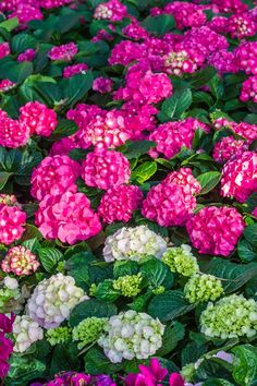 The Best Places To Buy Perennials, Trees and Shrubs Online - Gardening @ From House To Home Order Plants Online, Online Plant Nursery, Spring Hill Nursery, Flower Nursery, Garden Nursery, Herb Seeds, Small Backyard Landscaping, Small Trees