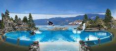 SeaWorld ends killer whale breeding programs at all its parks
