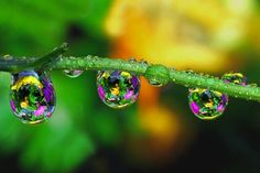 50+ Examples of Dew Drop Photography that Makes You Chill Out