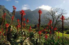 Jardim Botânico Nacional de Kirstenbosch, África do Sul