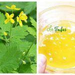 Tinctura de Rostopască – Tratamente şi Reţetă de Preparare | La Taifas Herbs, Health, Plant, Health Care, Herb, Salud, Medicinal Plants