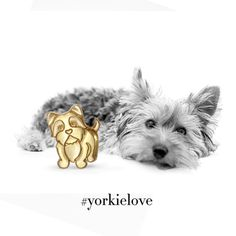 We are all excited introduce our newest furry little Yorkie to celebrate National Adopt a Dog month! We think he can smell love in the air because he's got that adorable heart shaped nose! #yorkielove #Nationaladoptadogmonth #alexwoo #littleicons #yorkie #lovegold #madeinny  http://www.alexwoo.com/little-animals-yorkie-in-14kt-yellow-gold.html