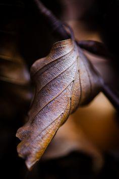 Brown - Bruin