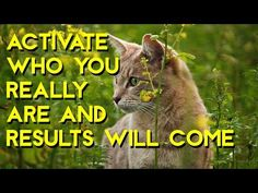 Here you can find the wisdom of Abraham Hicks, vibrate, attract and manifest :) Dont be shy and press the subscribe button for more daily videos. Have a wond...