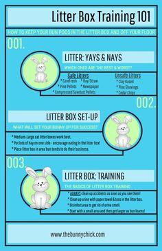 Bunny litter box training