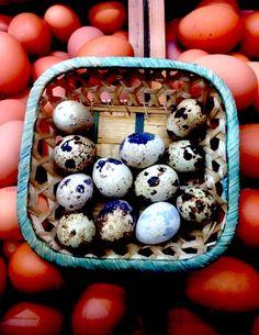 Son los huevos. Esta imagen representa la variedad en el mercado. Hay muchos tipos de huevos. Hay huevos pequeñas o largos de muchos tipos de pasajeros.