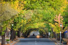 Hahndorf - Favourite shops - Julie Wellington, Ophelia Cottage, Haus (yum, yum food!), Bees Wax Natural Health & Harmony,
