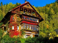 St Gilgen, St Gilgen, Austria - A beautiful house cover in bright colourful autumn leaves in St Gilgen. Another found during my Salz & Seen cycle trip. #architecture #Colorful