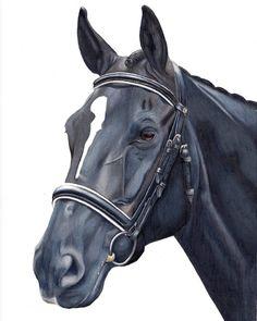 """Mi piace"": 1,219, commenti: 30 - Kate Spratt Equine Art (@kate_spratt_equine_art) su Instagram: ""'Adonis' details... 💙  www.katesprattart.com  #katesprattart #portraitartist #pencilart #horsesofig…"""