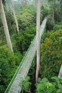 Rainforest Discovery Centre in Sabah - Image © Borneo Travel / Used with Permission