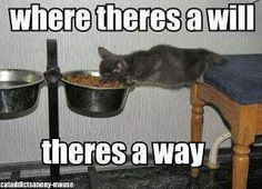 LMAO! My Gypsy would do this for some extra food!