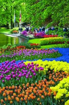 【キューケンホフ公園】オランダの首都アムステルダムの南西25km、リッセにある、チューリップなどの花々が咲き乱れる広大な公園。15世紀には貴族の領地(狩猟場)だったところで、19世紀に庭園が造成され、1914年に一般に開放された。32haの園内に100種450万株のチューリップをはじめ、ヒヤシンス、スイセンなど700万株の花々が植えられている。 Keukenhof Gardens, Netherlands