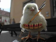 Armed for Batle