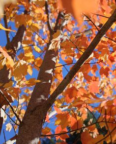 Autumn is a second spring when every leaf is a flower. - Albert Camus