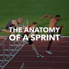 The Anatomy of a (Scrum) Sprint