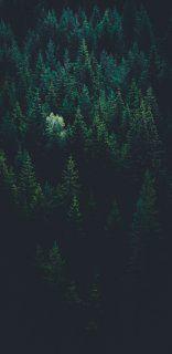 Wallpaper Iphone Dark Backgrounds Night 15 Ideas For 2019 Iphone Backgrounds Nature, Dark Backgrounds, Wallpaper Backgrounds, Harry Potter Tumblr, Tumblr Photography, Wildlife Photography, Park Photography, Black Iphone Background, Background Images