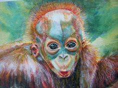 cucciolo orango acquerello dipinto originale di Stellangelo