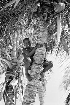 Menino subindo num coqueiro. Ele conseguiria ficar lá durante dias?