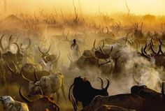Dinka Cattle Camp at sunset viahttp://carolbeckwith-angelafisher.com